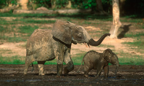 Lord's Resistance Army funded by elephant poaching, report finds