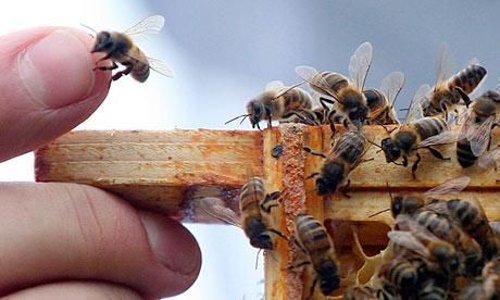 Third of all honeybee colonies in England did not survive winter