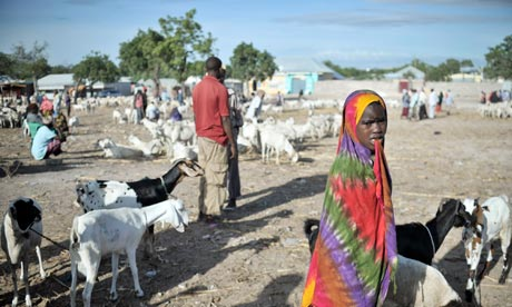 Bakara animal market in Mogadishu, Somalia