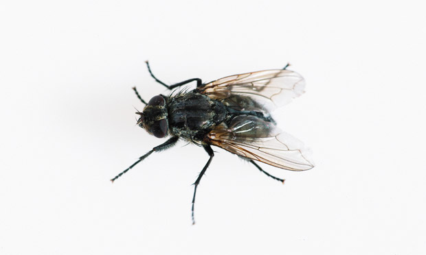 Time Passes More Slowly For Flies Study Finds Science