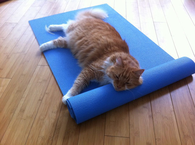 Cats Doing Yoga Your Best Pictures Life And Style The Guardian