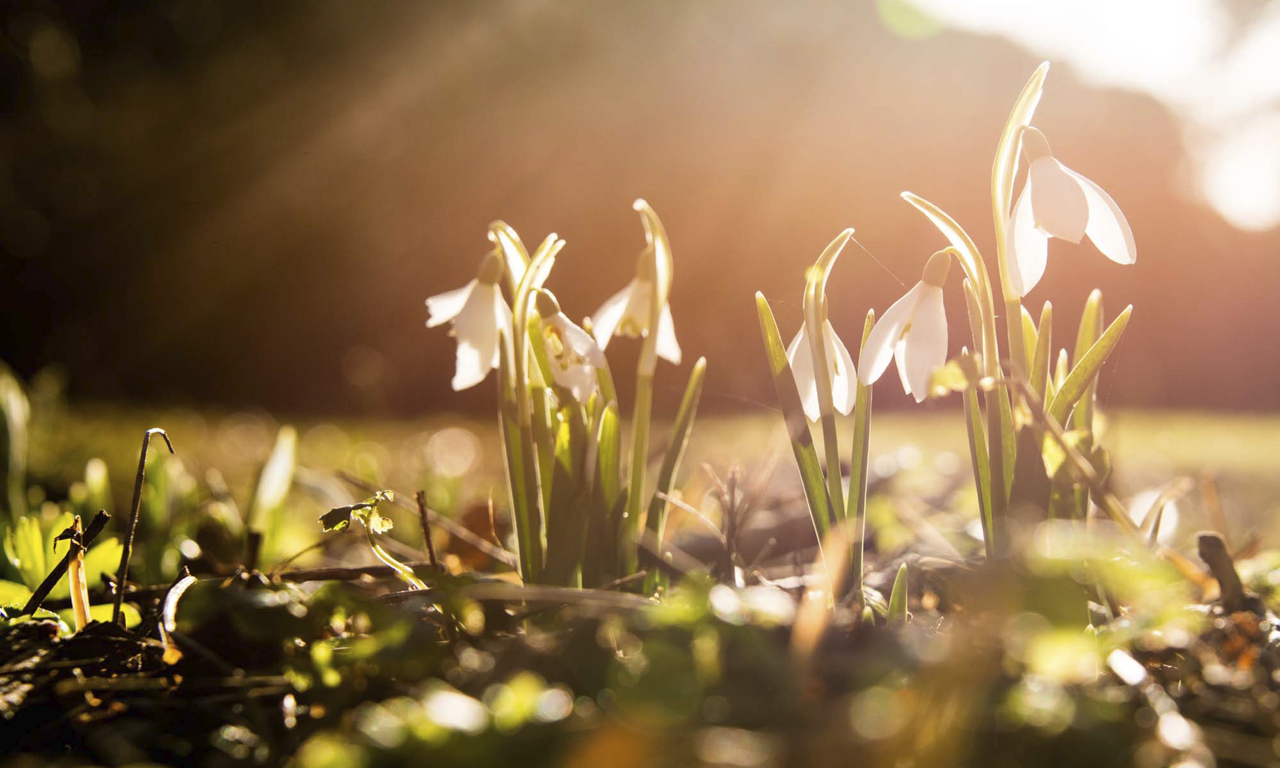 Signs Of Spring Appear Early Across Uk After Mild Winter