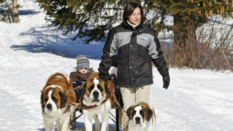 Walking with St Bernard dogs in Switzerland