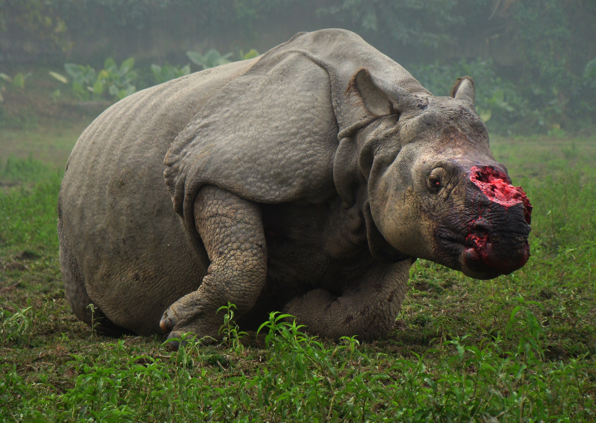 What Do the Rhinos Eat Normally?