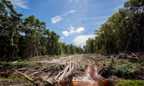 An access road is constructed in a peatland forest being cleared for a palm oil plantation in Trumon subdistrict, Aceh province, on Indonesia's Sumatra island.