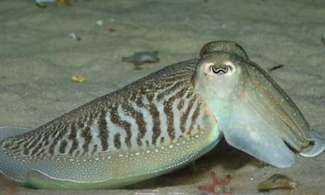 Super-rats and cephalopods: the species that could conquer ...