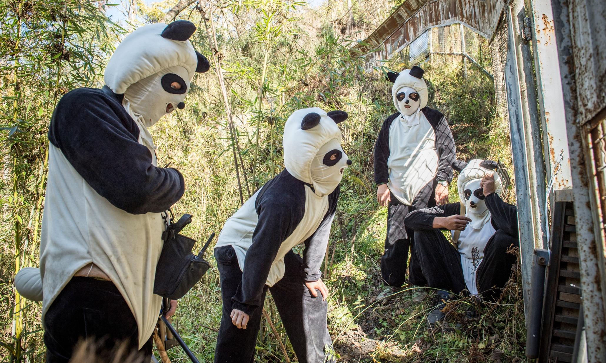 Pornhub Just Sent Out A Casting Call For Panda Shaggers
