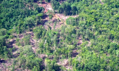 Lowland rainforest which has been logged in New Britain, Papua New Guinea.