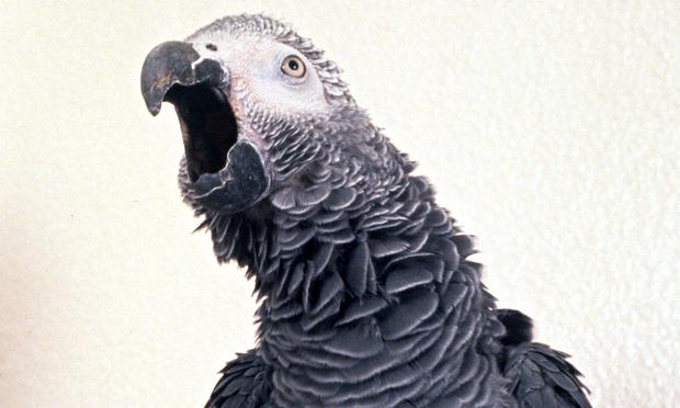 alex parrot 1