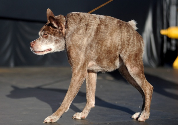 Creepy Dog From The World S Ugliest Dog Contest Held In