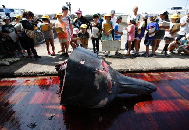 Grade school students and residents look at the head of a carved Baird's Beaked whale at Wada port in Minamiboso, southeast of Tokyo June 26, 2014. To mark the start of Japan's whaling season, workers in the coastal town of Minamiboso on Thursday carved up one of the animals as a crowd of grade school students and residents watched, with free samples of its fried meat handed out later. The annual event took place in the district of Wada in the town south of the capital, Tokyo, a week into Japan's first coastal whaling season since a global court halted the country's better known Antarctic whaling in March.