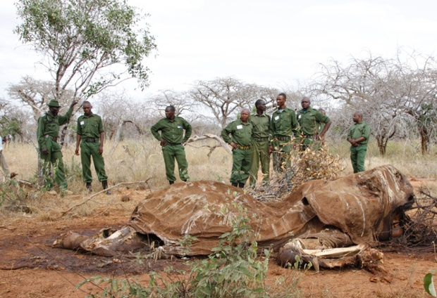 In this photo of  Thursday, June 19, 2014.  Kenyan Wildlife Rangers stand near the carcass of an elephant, in Tsavo East, Kenya. Environmental crime such as the poaching of elephants for ivory and the selling of illegal charcoal is helping to finance criminal, militia and terrorists groups, a report from the United Nations Environment Program released Tuesday, June 24, 2014 said. The Somali terror group al-Shabab makes between $38 million and $56 million per year in illegal charcoal, the report said. Other militia groups _ including the Lord s Resistance Army, which U.S. troops are trying to help hunt down in central Africa _ make between $4 million and $12 million a year by trafficking elephant ivory.