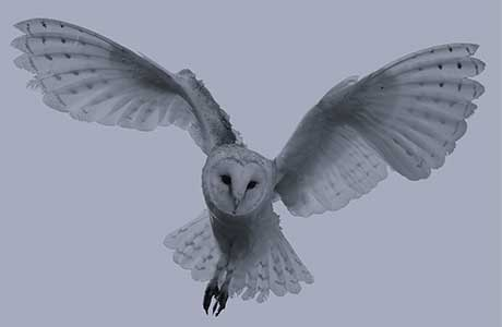 22.00: Barn owls will be out hunting - you might see one ...