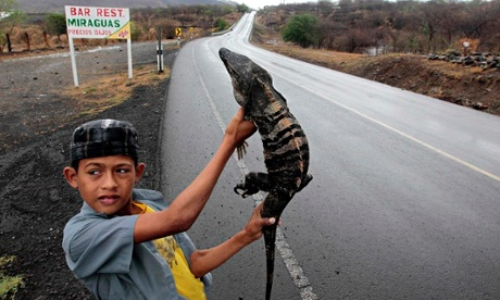 MDG : iguana for sale near Managua, Nicaragua