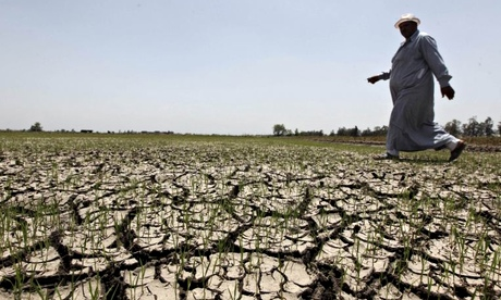 一位埃及农民在尼罗河以前灌溉的农场中的干旱地走过他的作物