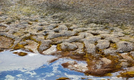 Patterned ground and stone circles formed above permafrost in the high Arctic on Spitsbergen, Svalbard