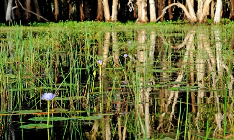 Water lillies – outback style at Bamurru plains.