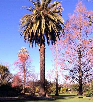 The Botanic Gardens, Albury