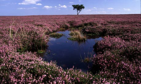 A peat bog on the North York Moors