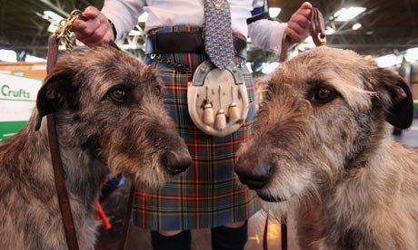 Crufts: Irish wolfhounds