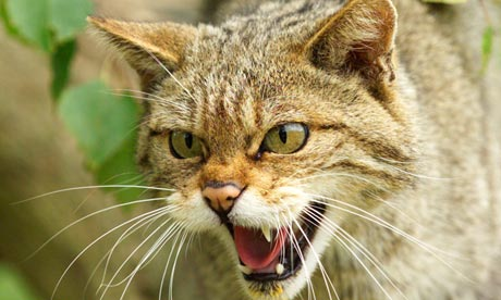 Why the lynx effect would send Scotland wild