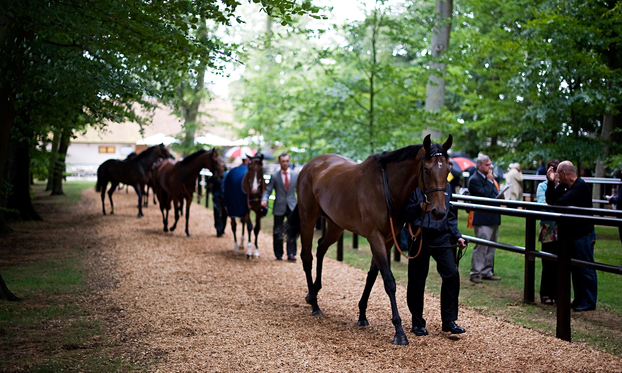 Horse racing tips: Thursday 9 July - Horse Racing news