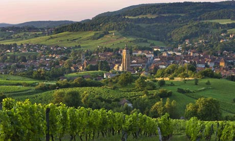 How green is your vallée .... vineyard in the Jura region, France