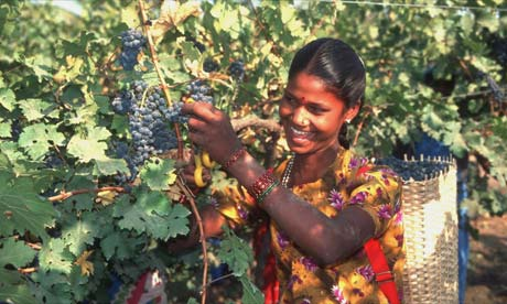 grapes in india