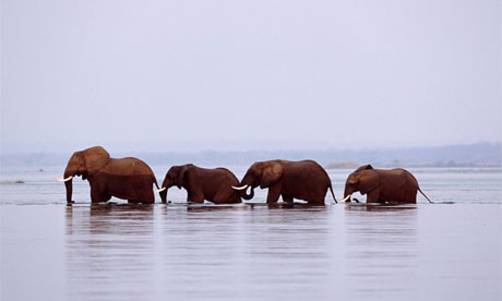 elephant460