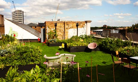 Dalston Roof Park flowers