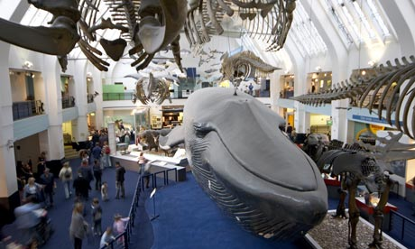 Blue whale, Natural History Museum, London