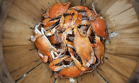 Steamed crabs, Chesapeake Bay, Maryland