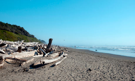 Kalaloch Beach, Olympic Peninsula Washington
