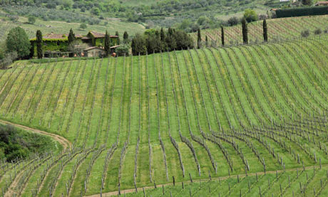 Fontodi vineyard, Chianti