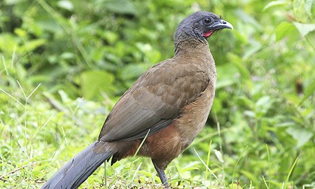 Top 10 Animals To See In Tobago Tripulous