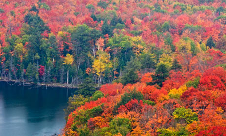 Autumn forest and Porridge Lake from Fire Tower lookoff. Elliot Lake, Ontario, Canada.